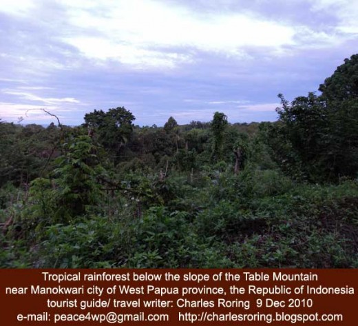 the view of the tropical rainforest at the north coast of Manokwari regency below the Table Mountain