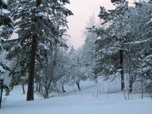 Eugene winter