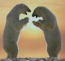 Even Polar Bears Worship The Sun