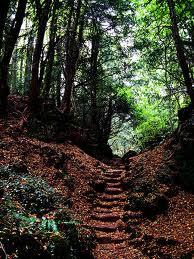 Puzzle Wood, Gloucestershire