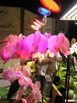 Even flowers can be successfully grown indoors under LED grow lights