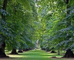 Westonbirt Arboretum in Spring