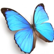 molson5070 profile image