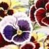 newwoman54 profile image