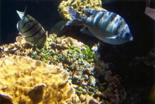 Saltwater fish, Maui Ocean Center in Ma'alaea, Hawaii