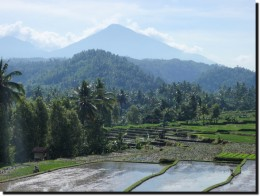rice paddies in west Bali