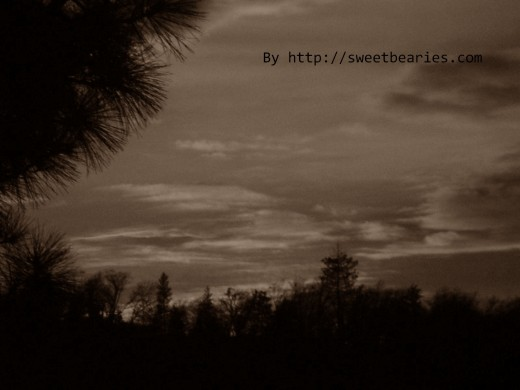 Sepia imagery of trees and a sunset in the San Bernardino Mountains.