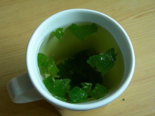 Seemingly refreshing lemon balm tea is relaxing to its best.