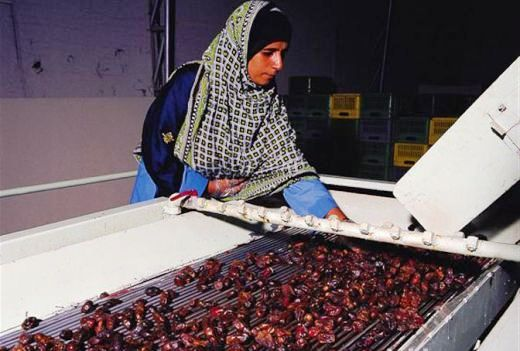 Woman attending a machine at a Dates Processing Plant