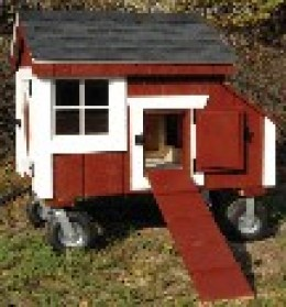 Little Red Wagon 2-3 hens