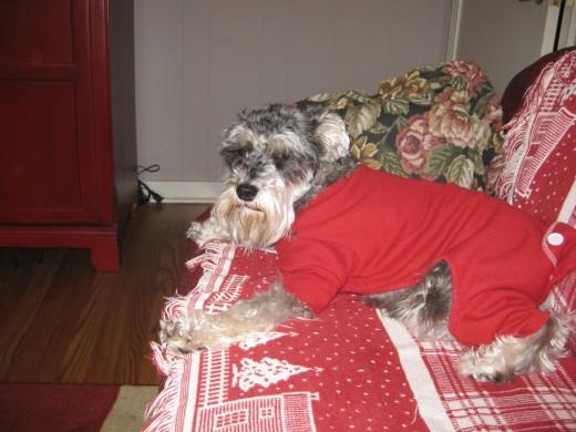 Puppy Girl relaxing in her winter PJs.