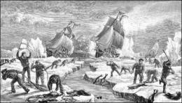 Seal cull