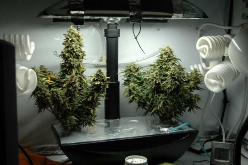 AeroGarden grow with side lighting for fatter plants.