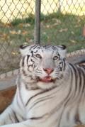 Zoos, Exotic Animal Captivity Education