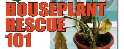 houseplant rescue 101