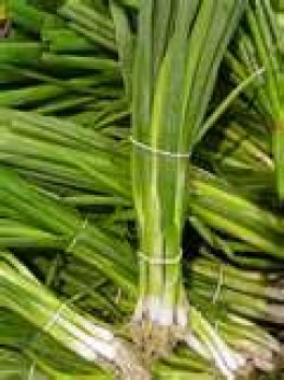 Some call them green onions, they are also known as spring onions, the blades are chopped and used as chives.