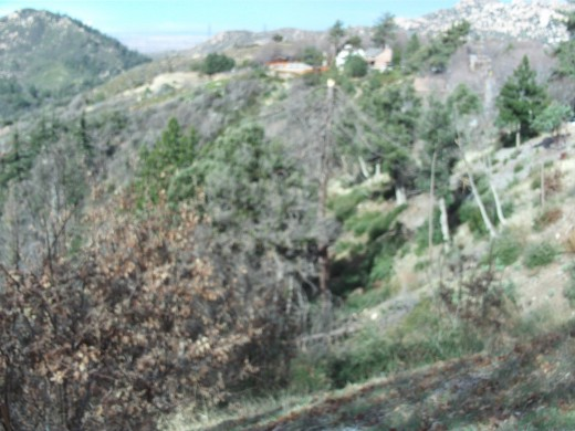 Picture of the trees on the back side of the San Bernardino Mountains in the Lake Arrowhead region.
