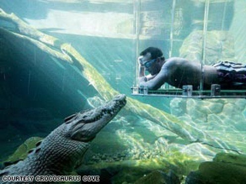 Get up close and personal with a crocodile..safely. Image from Crocosuarus Cove