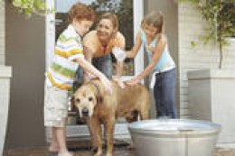 Save money on dog grooming by washing him at home.