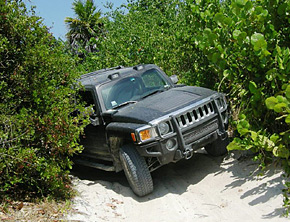 Hummer in the jungle