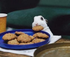 Naughty Bunny - What To Do When Your Bunny Behaves Badly