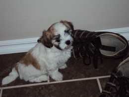 Molly as a puppy