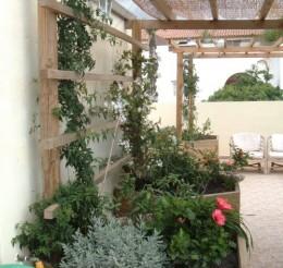 Jane's butterfly garden on the balcony