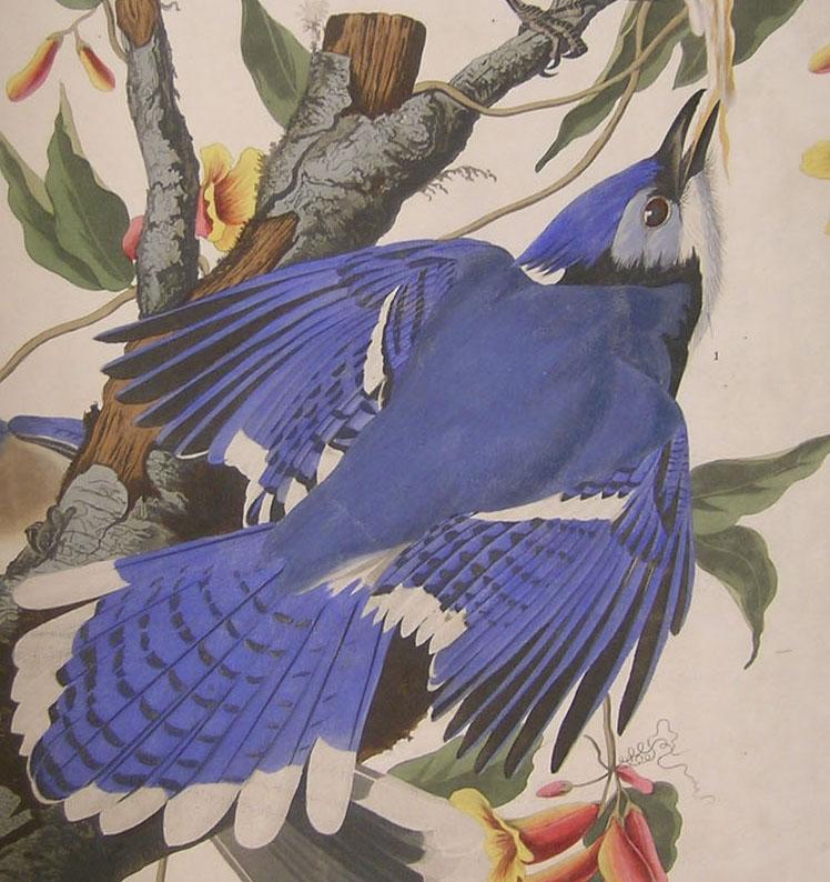 John James Drawings John James Audubon Prints And