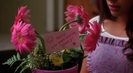 Rachel's apology flowers
