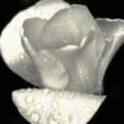 Bonnie Lang profile image
