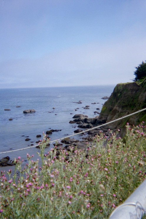 pretty little flowers, Pacific Ocean, eel river, sky