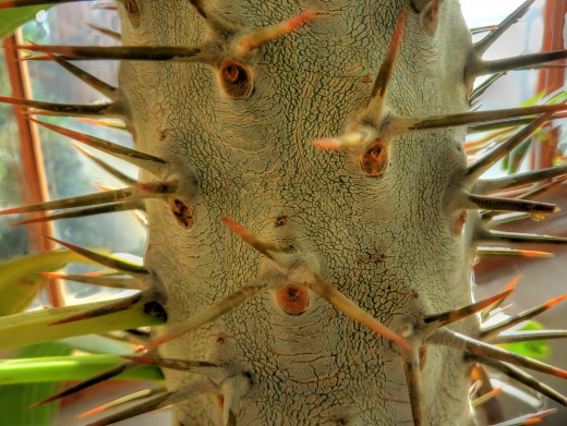 and more thorns..