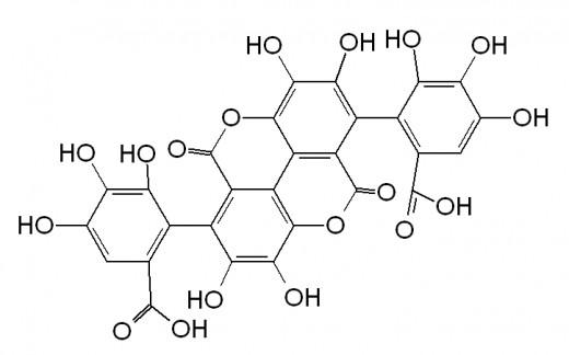 Tannin Structure