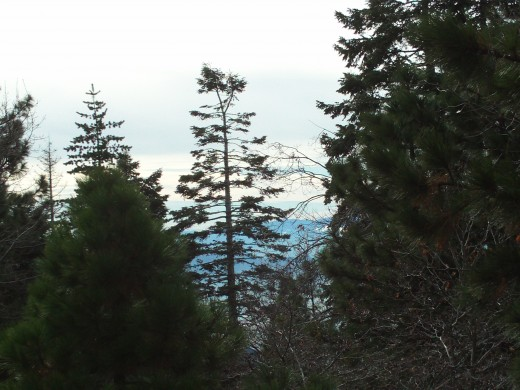The view of a tree from the Rim of the World Highway.