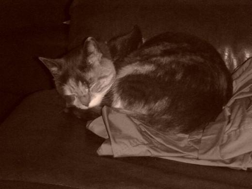 Profile pic cat in sepia sleeping
