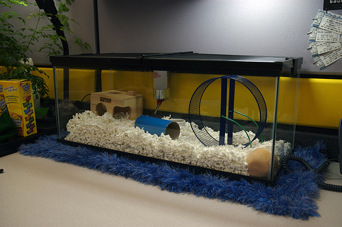 A secure aquarium top keeps your caged critters safe.