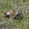 birder profile image