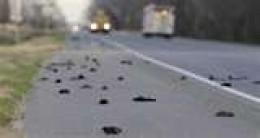 Dead Birds in Beebe, Arkansas