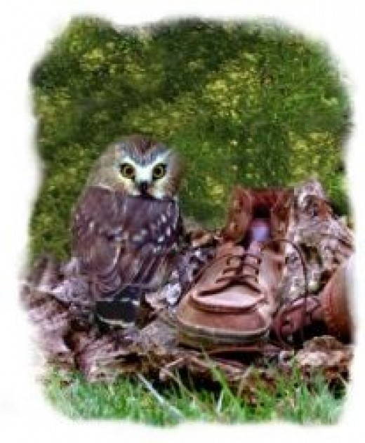 Owl and shoe composite photo -- to go with story text and give size comparison.