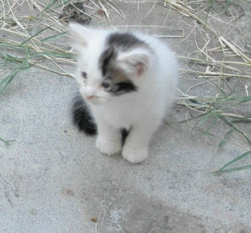 Blanca when I first found her under a small wood pile with her 2 brothers Mayfield & Peabody and Sister Curly Sue -  Mama Cat had them safely hidden from predators