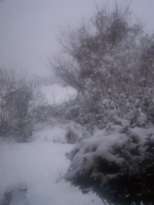 Christmas snow 2010