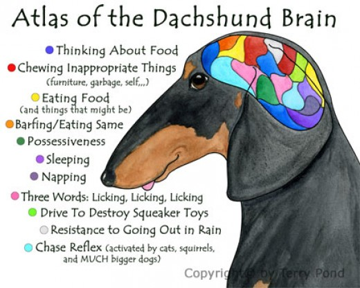 Perfectly depicts the Daxie's thought process, I think!