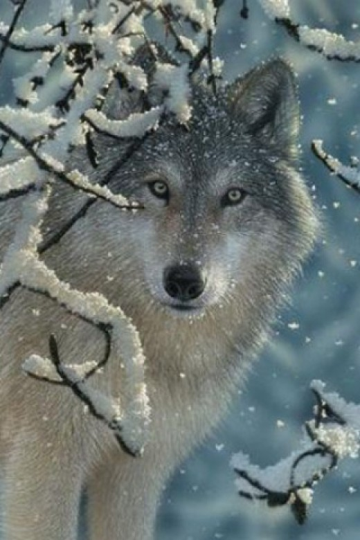 Sam would turn into a wolf when the weather became cold.