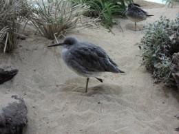 Beach Bird Exhibit