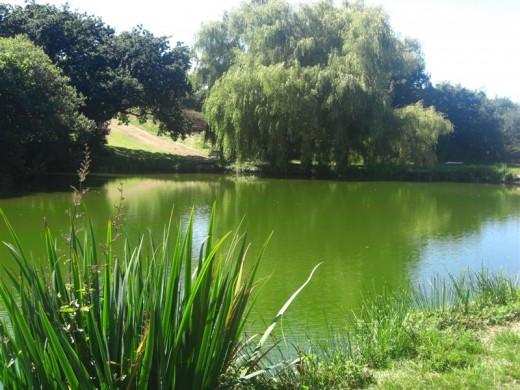 Les Rouvets Coarse Fishing Lake