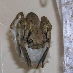Spider,Spider Weave Your Web