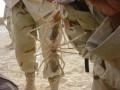 Camel Spiders: Desert Myth or Giant Hoax?
