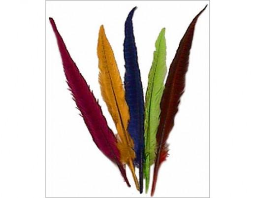 Beautiful Tall Feathers
