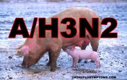 H3N2 Swine Flu Virus
