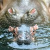 gypsumgirl profile image